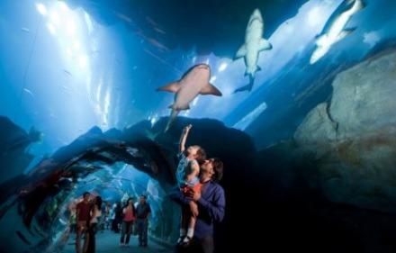 dubai-aquarium02