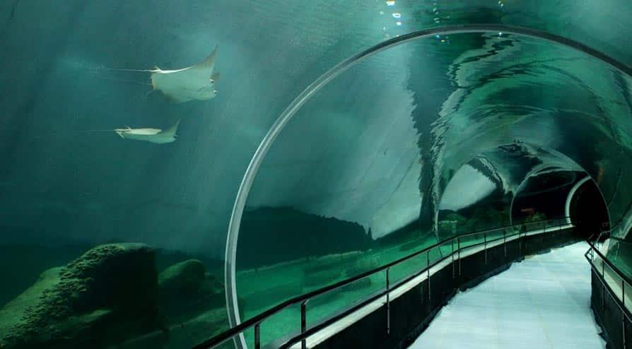 aquario-rio-06